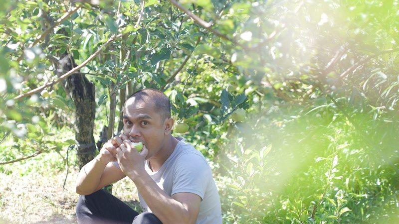 Memetik Apel di Malang