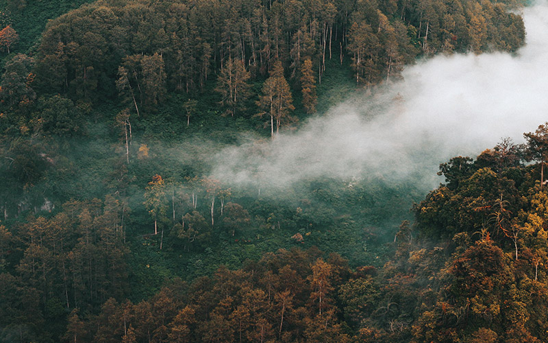 AI-Based Smart Forest Guardian to Protect Indonesian Forests
